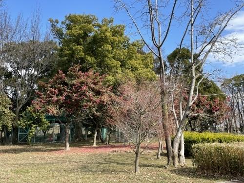 庄内緑地公園へお散歩♬_f0373339_16423180.jpeg