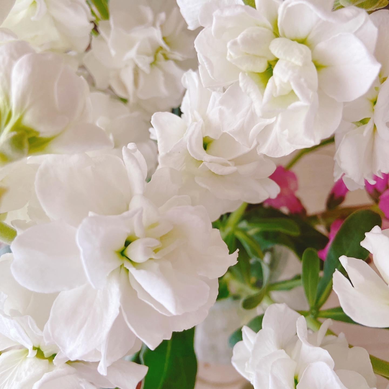 春の空気に、お部屋のお花もどんどん開く、、_f0017548_16584733.jpg