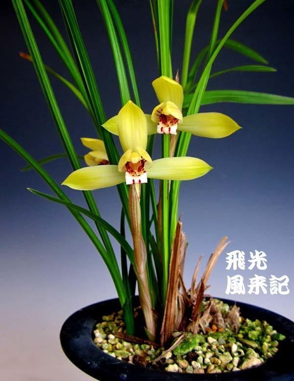 豆弁蘭・飛光          No.2081_d0103457_23182406.jpg