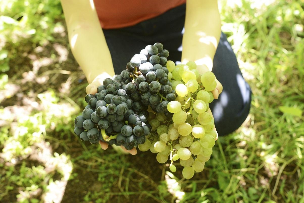 """ルカワインオリジナルワイン""""おかえりワイン""""始めます。_b0016474_06212619.jpg"""