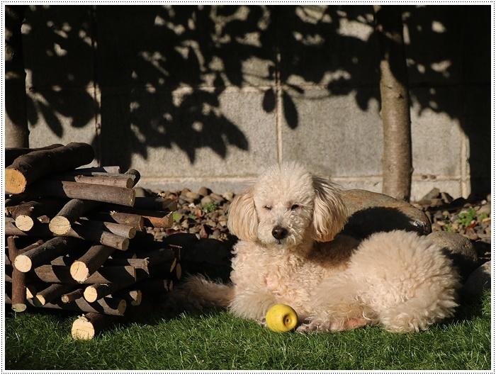お庭BBQにはちと寒い。。。(*⌒∇⌒*)テヘ♪_b0175688_19340299.jpg