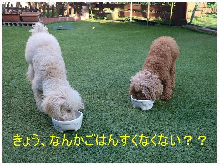 お庭BBQにはちと寒い。。。(*⌒∇⌒*)テヘ♪_b0175688_19340711.jpg