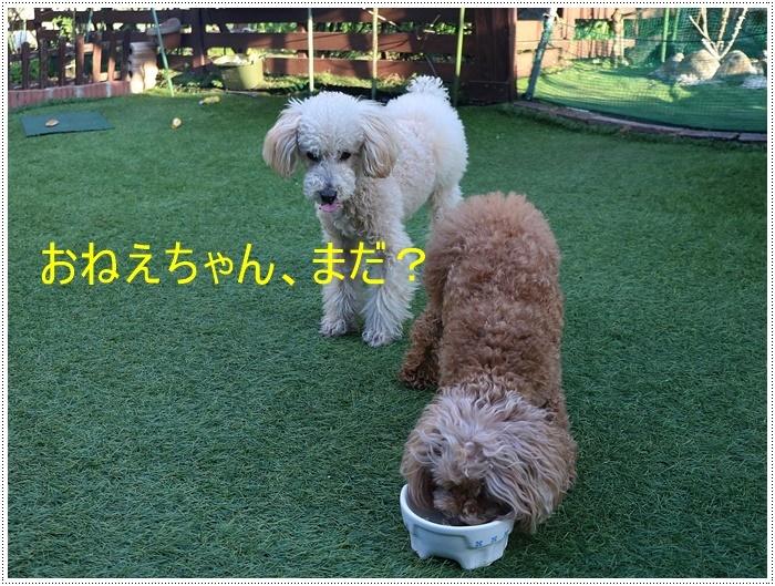 お庭BBQにはちと寒い。。。(*⌒∇⌒*)テヘ♪_b0175688_19341827.jpg