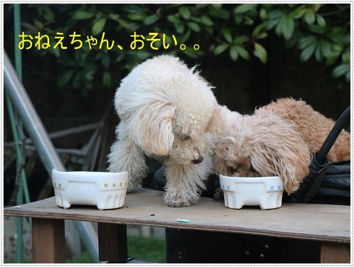お庭BBQにはちと寒い。。。(*⌒∇⌒*)テヘ♪_b0175688_19374779.jpg