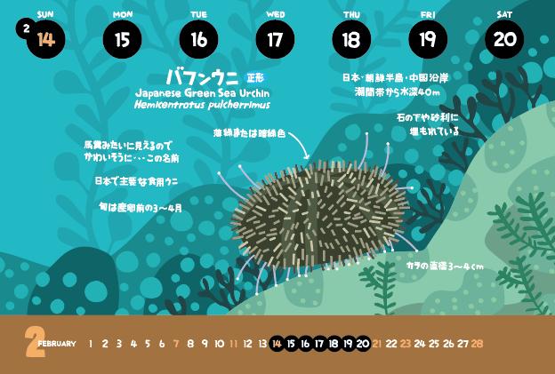 バフンウニ_f0292806_07211812.jpg