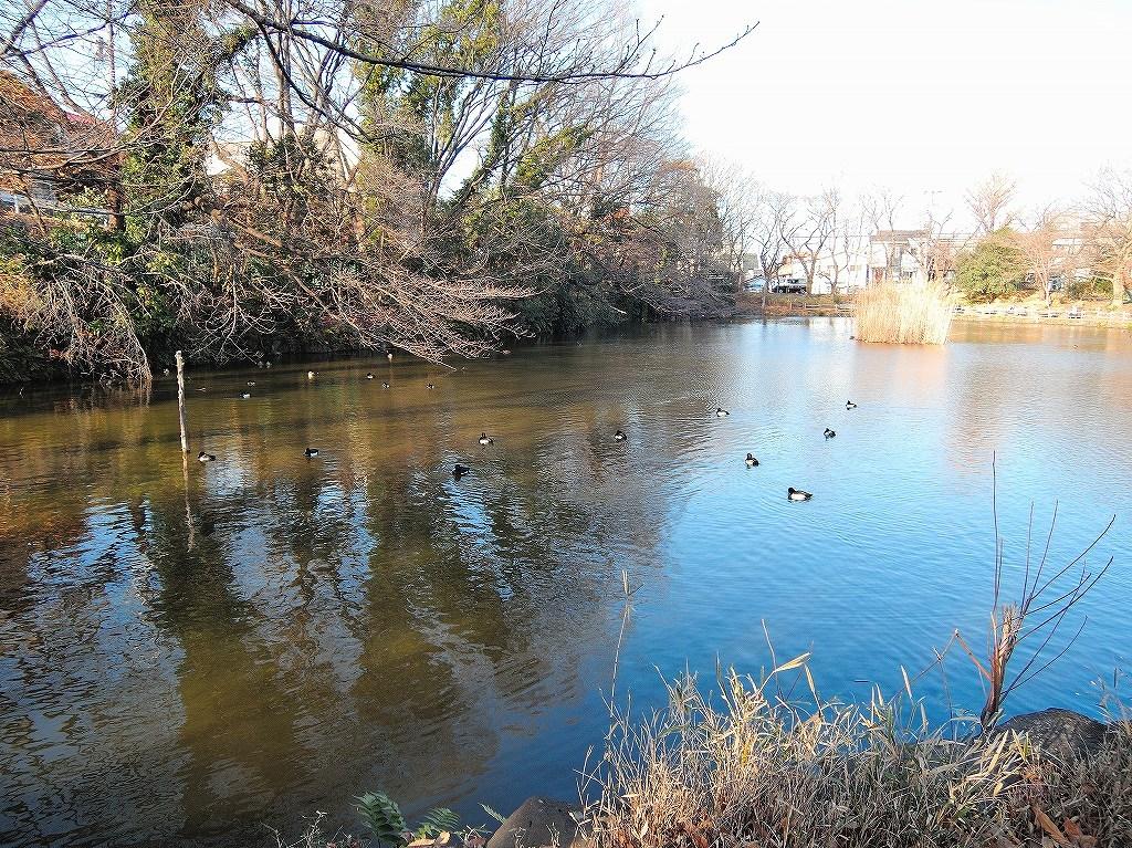 ある風景:Kikuna pond, Yokohama@Dec~Jan #3/fin_d0393923_09480817.jpg