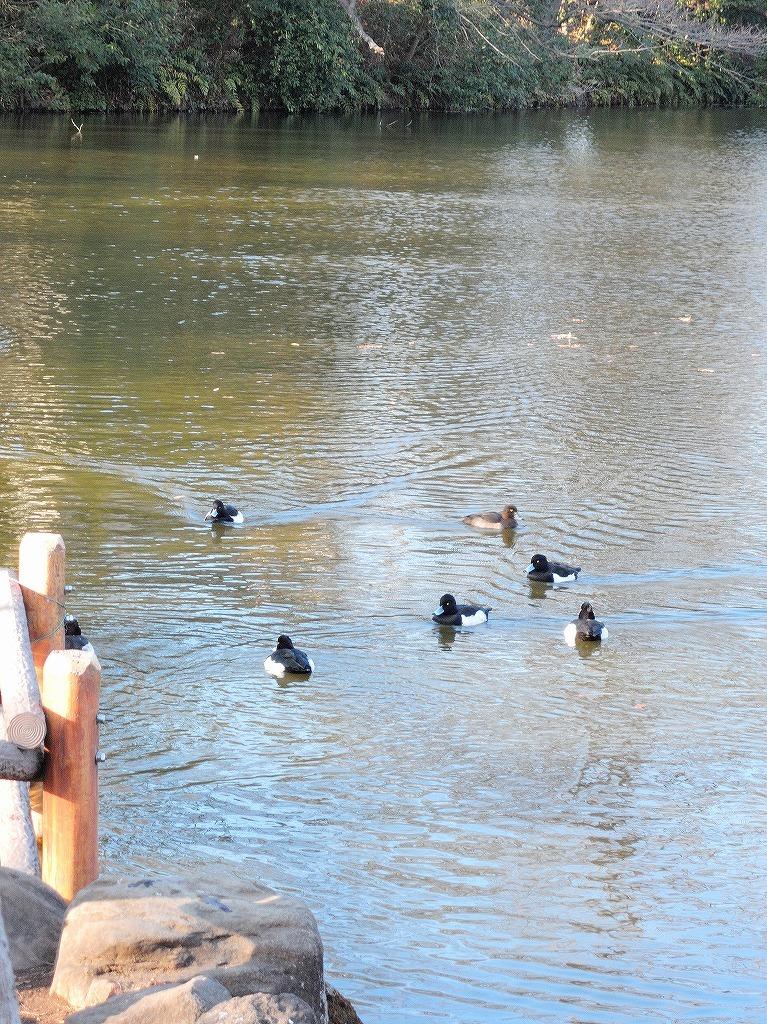 ある風景:Kikuna pond, Yokohama@Dec~Jan #3/fin_d0393923_09480910.jpg