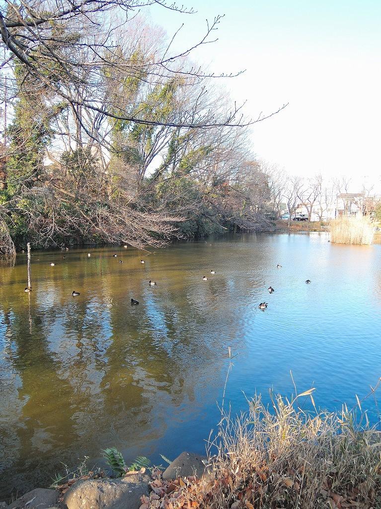 ある風景:Kikuna pond, Yokohama@Dec~Jan #3/fin_d0393923_09480950.jpg