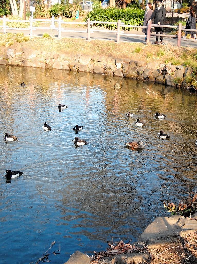 ある風景:Kikuna pond, Yokohama@Dec~Jan #3/fin_d0393923_09482101.jpg