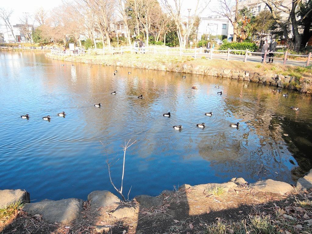 ある風景:Kikuna pond, Yokohama@Dec~Jan #3/fin_d0393923_09482141.jpg