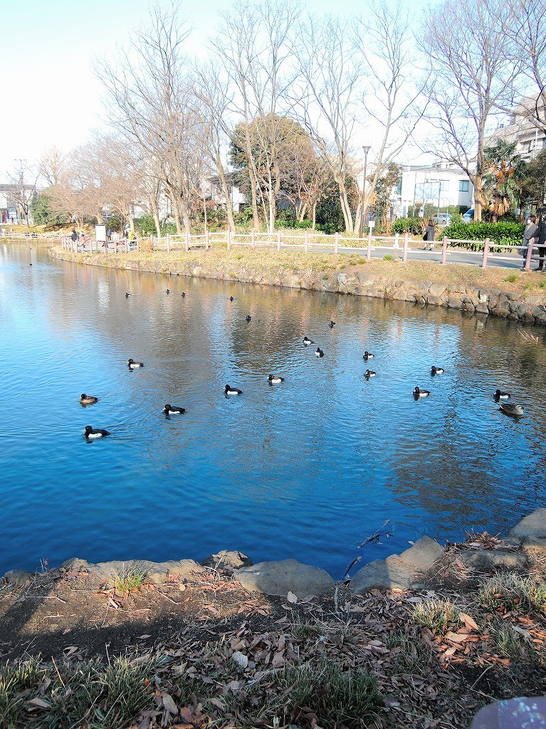 ある風景:Kikuna pond, Yokohama@Dec~Jan #3/fin_d0393923_09482199.jpg