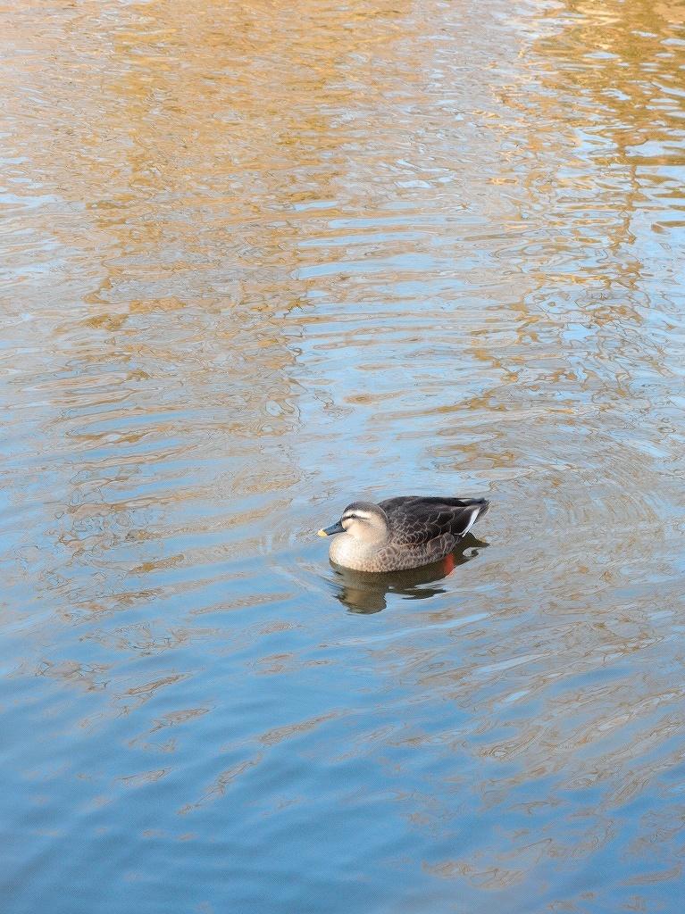 ある風景:Kikuna pond, Yokohama@Dec~Jan #3/fin_d0393923_09483412.jpg