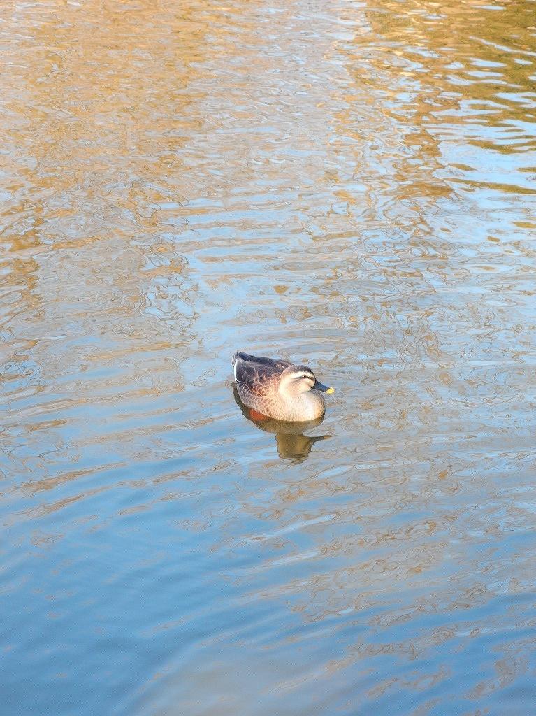 ある風景:Kikuna pond, Yokohama@Dec~Jan #3/fin_d0393923_09483477.jpg