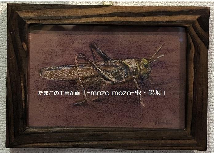 たまごの工房企画「-mozo mozo- 虫・蟲展」 その3_e0134502_18585637.jpg