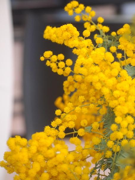 春の始まりの色_e0396727_23132578.jpg