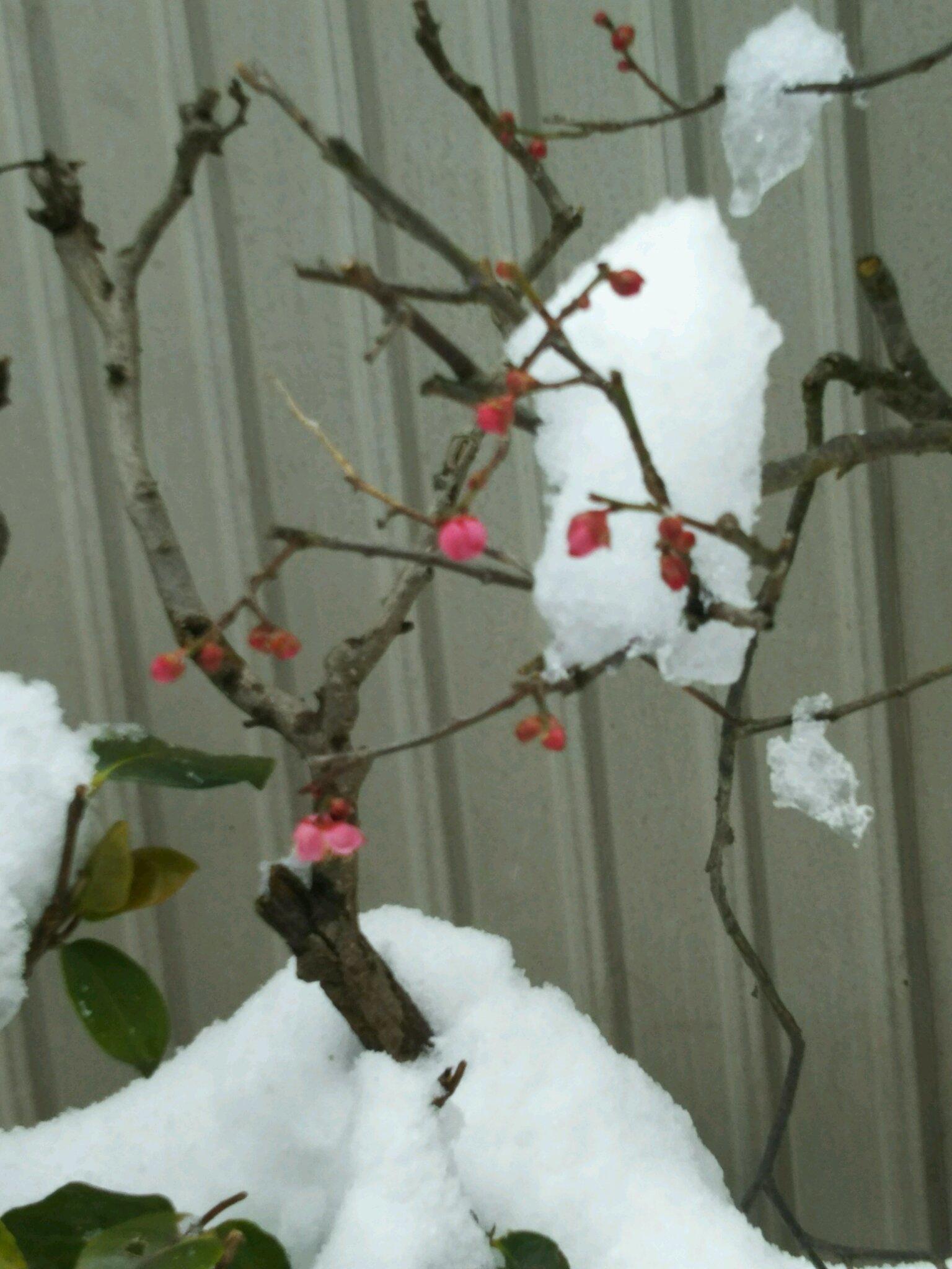 又雪です。_f0040734_13563882.jpg