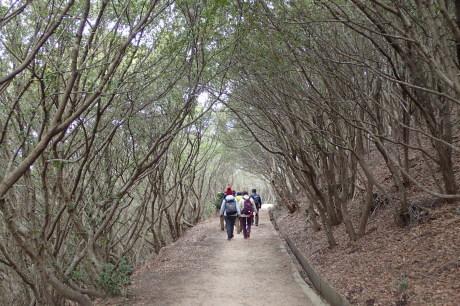 体力に応じて楽しむ山歩き『塩屋から板宿』A班_c0218841_10421680.jpg