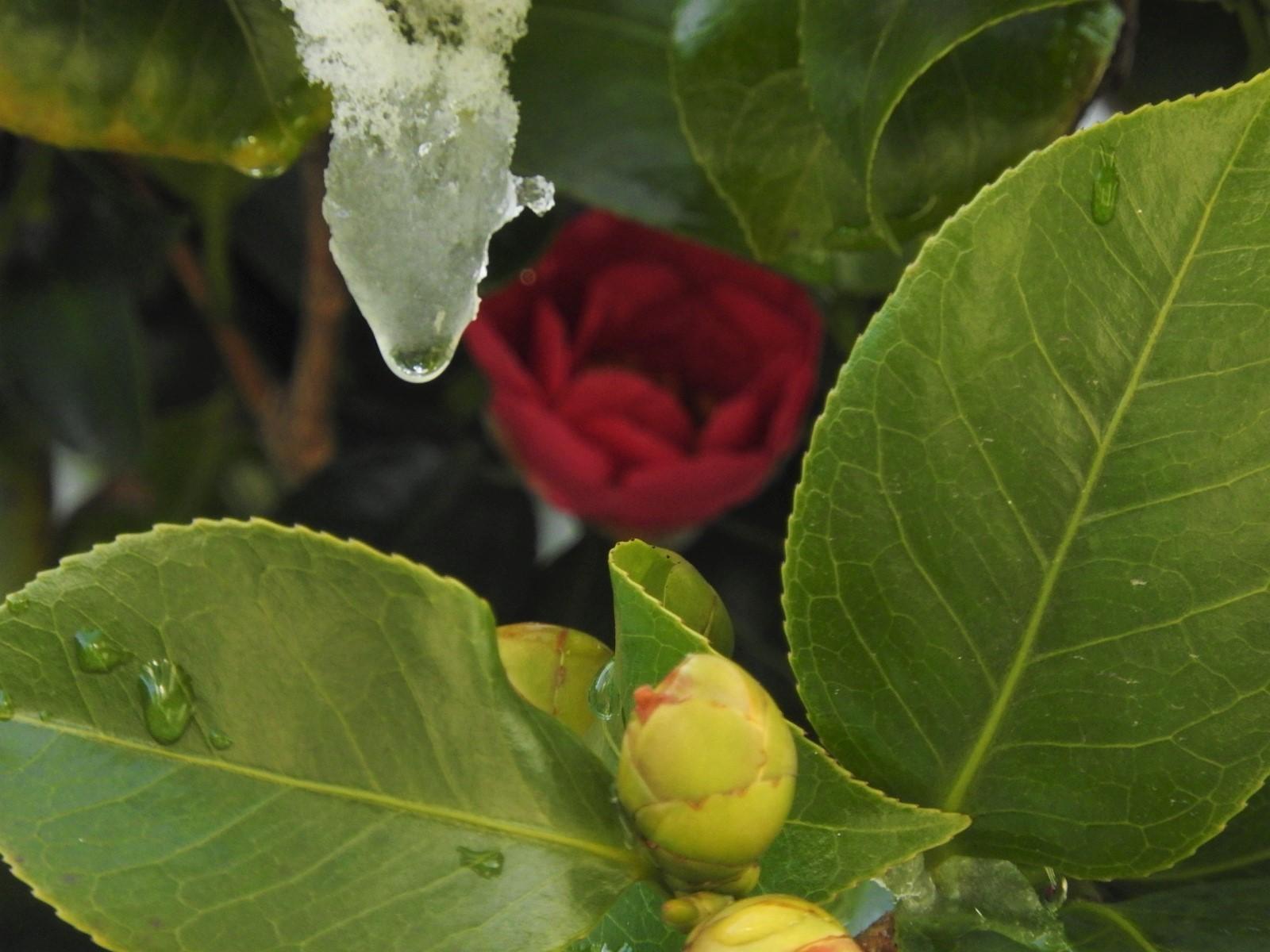 雨水の朝_e0406450_10535574.jpg