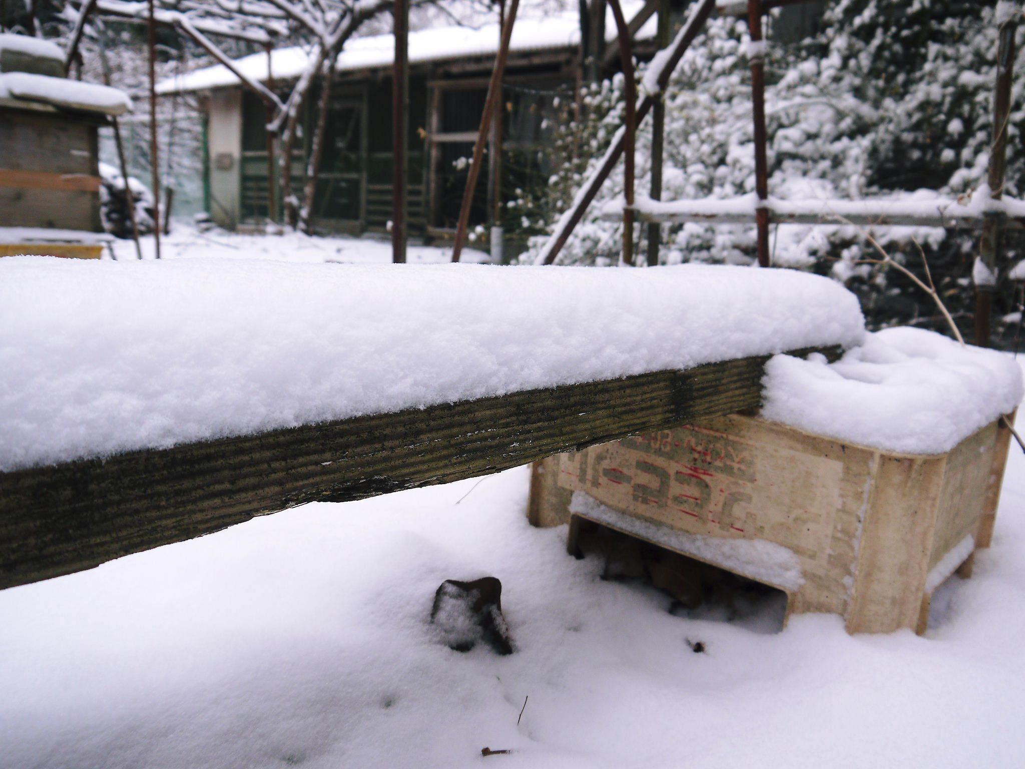 株式会社旬援隊の冬の様子2021 春と思い咲き始めた花々に雪が積もっています!_a0254656_13310385.jpg