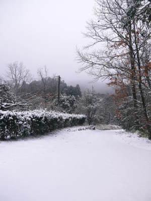 株式会社旬援隊の冬の様子2021 春と思い咲き始めた花々に雪が積もっています!_a0254656_13353810.jpg