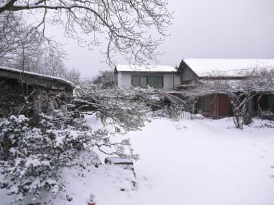 株式会社旬援隊の冬の様子2021 春と思い咲き始めた花々に雪が積もっています!_a0254656_13414070.jpg