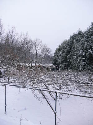 株式会社旬援隊の冬の様子2021 春と思い咲き始めた花々に雪が積もっています!_a0254656_13444271.jpg