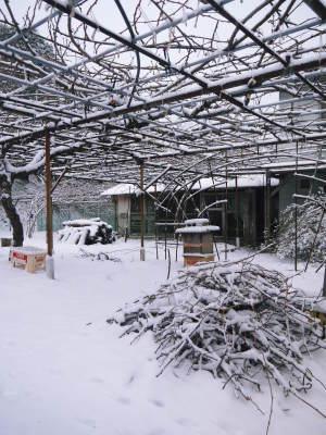株式会社旬援隊の冬の様子2021 春と思い咲き始めた花々に雪が積もっています!_a0254656_14211709.jpg