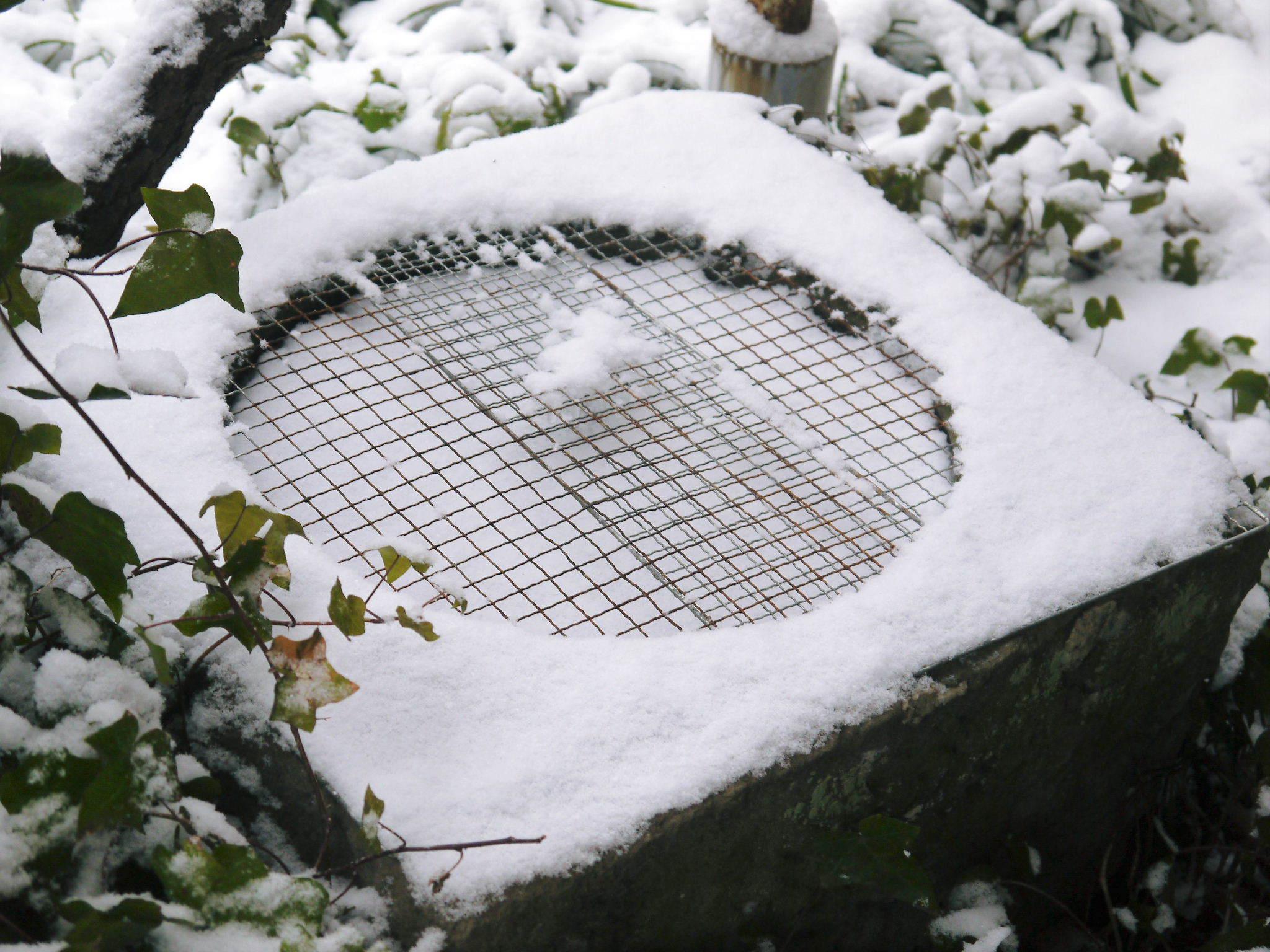 株式会社旬援隊の冬の様子2021 春と思い咲き始めた花々に雪が積もっています!_a0254656_14265581.jpg