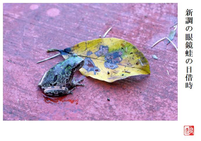 新調の眼鏡蛙の目借時_a0248481_22004175.jpg