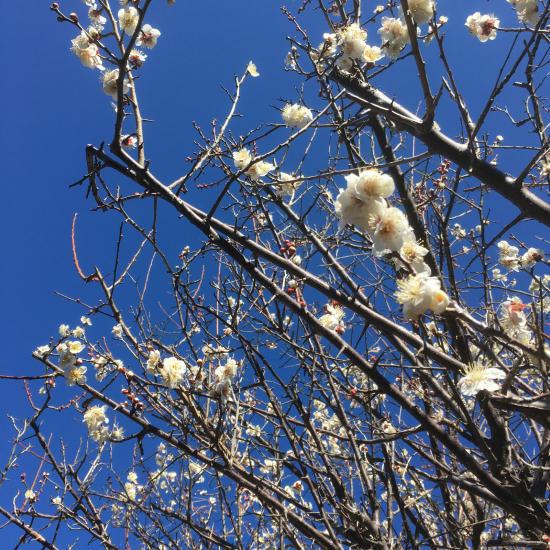春に向けて_e0143294_09364304.jpg