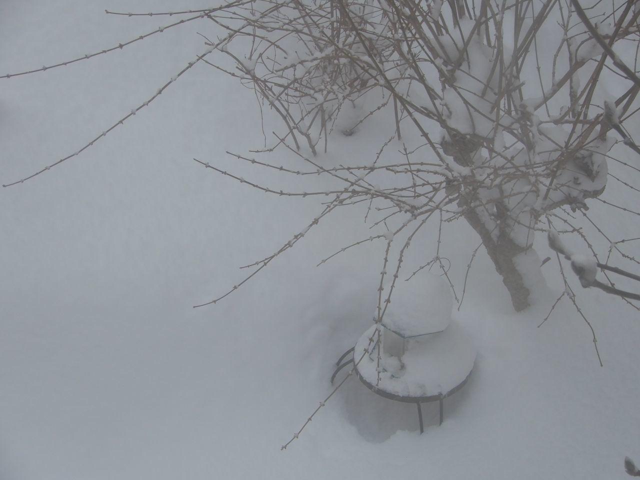 久しぶりに本格的積雪の朝_c0025115_20281835.jpg