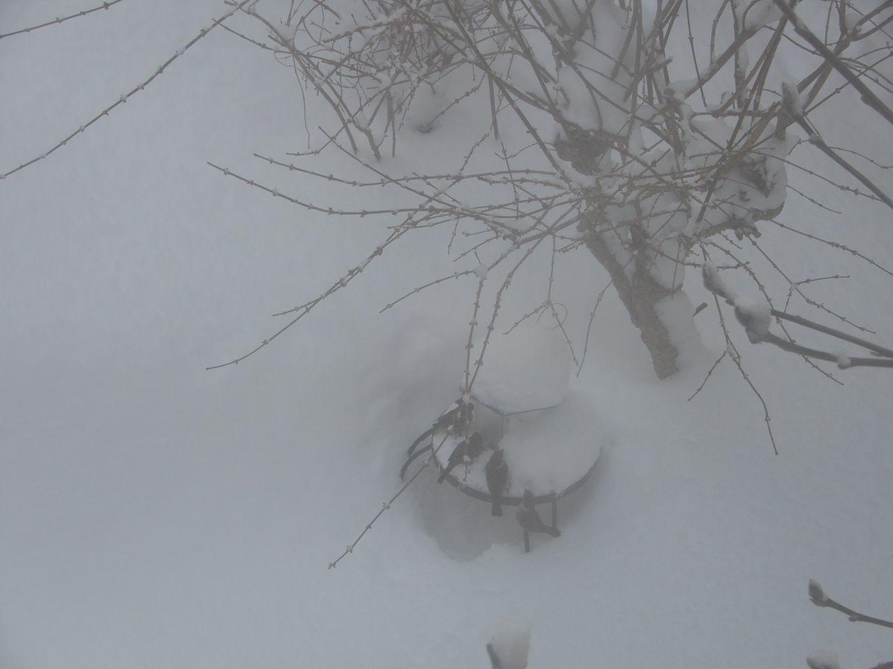 久しぶりに本格的積雪の朝_c0025115_20282331.jpg