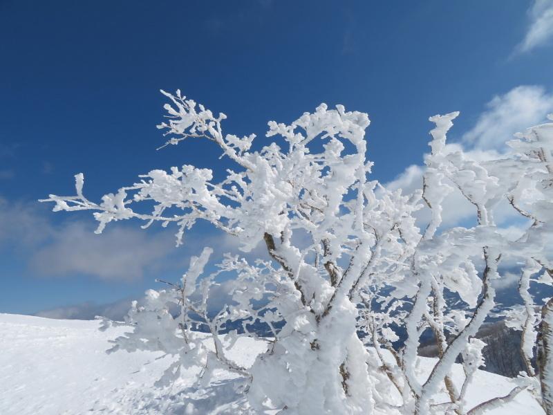 雪原が美しい 大日ケ岳 (1,708.9M)       登頂 編_d0170615_09194947.jpg