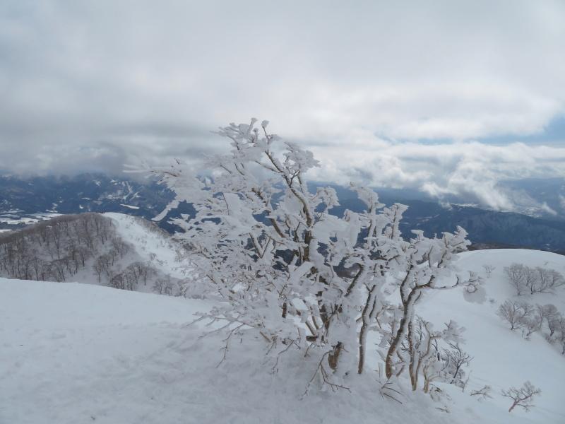 雪原が美しい 大日ケ岳 (1,708.9M)       登頂 編_d0170615_09202882.jpg