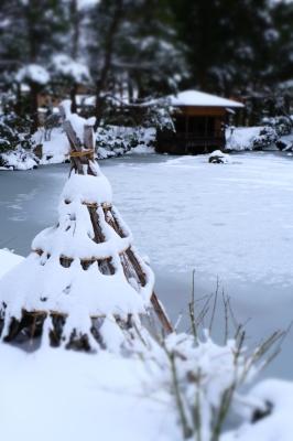 清水園の池は・・・。_e0135219_15181747.jpg