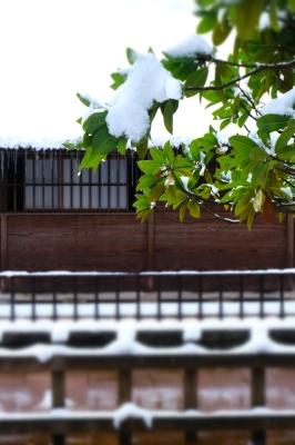 清水園の池は・・・。_e0135219_15290201.jpg