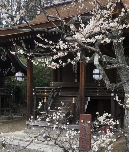 早春のお楽しみ_a0197730_10313443.jpeg