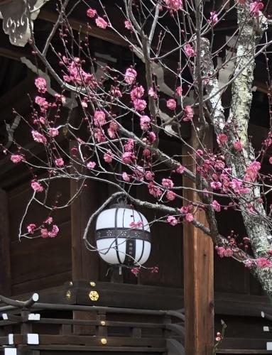 早春のお楽しみ_a0197730_10320013.jpeg