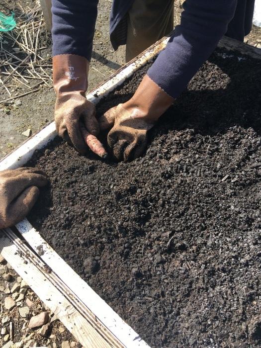 自然発酵の踏み込み苗床_e0155231_22422173.jpeg