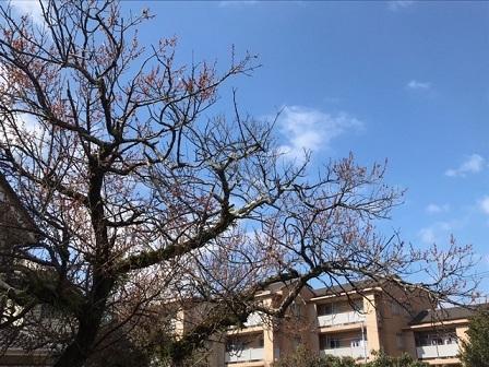 一転、よく晴れています。ゆうべ三好さんのピアノ演奏_e0130185_13353875.jpg