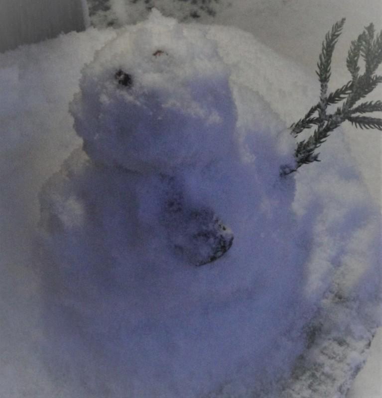 大雪を 嬉しがるのは 犬ばかり (北陸寒波来襲の1月に)_c0107612_11424667.jpg