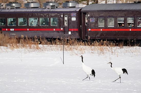 2021冬 しばれる道東の絶景を満喫(その2)_f0037227_15525602.jpg