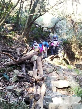 梅をたずねて カメさん歩き 『保久良神社梅林』_c0218841_17260123.jpg