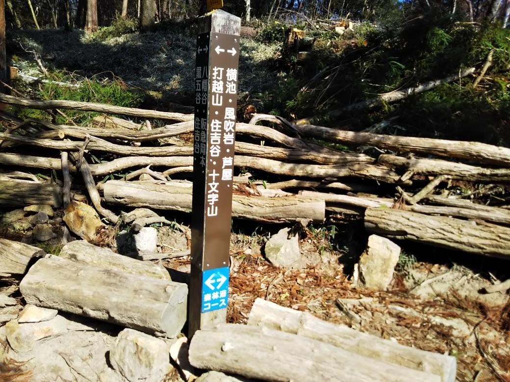 梅をたずねて カメさん歩き 『保久良神社梅林』_c0218841_17264452.jpg