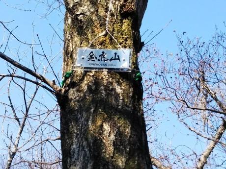 梅をたずねて カメさん歩き 『保久良神社梅林』_c0218841_17272905.jpg