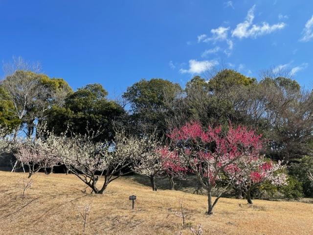 plum garden 2021_c0342646_10245462.jpeg