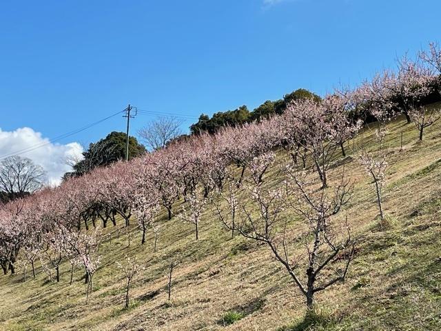 plum garden 2021_c0342646_10271228.jpeg