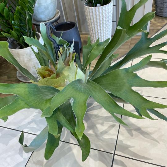 なんじゃこりゃ植物^ ^_e0156650_21295465.jpg