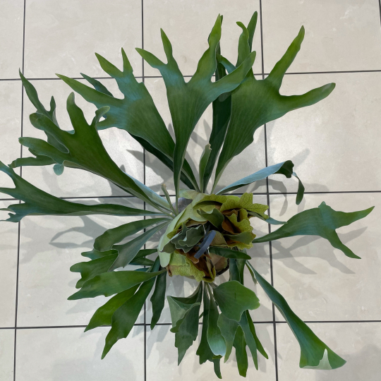 なんじゃこりゃ植物^ ^_e0156650_21295579.jpg