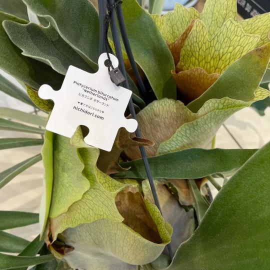 なんじゃこりゃ植物^ ^_e0156650_21295753.jpg